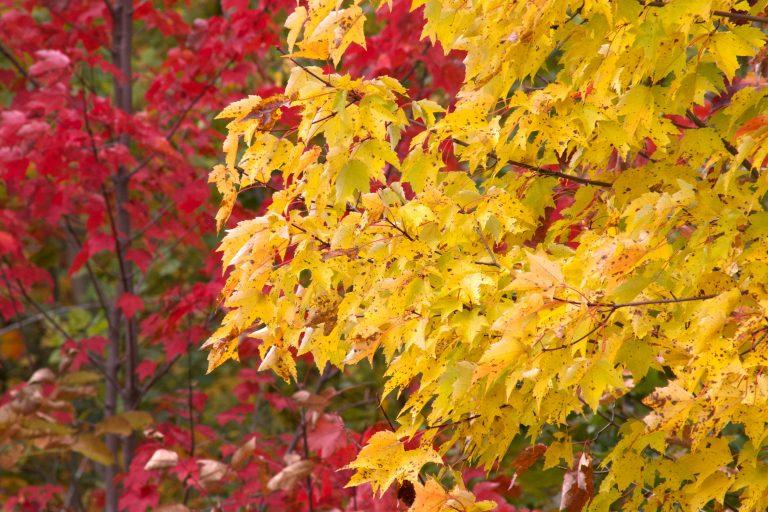 Mañana a las 7:28 comenzará el otoño
