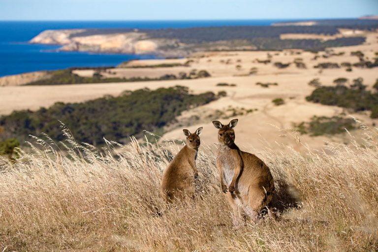 Kangaroo Island: un tercio de su ecosistema se ha perdido.